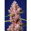 Sweet Seeds - Tropicanna Poison F1 Fast Version
