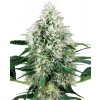 White Label Seeds - Pure Power Plant Automatic (Feminisiert)