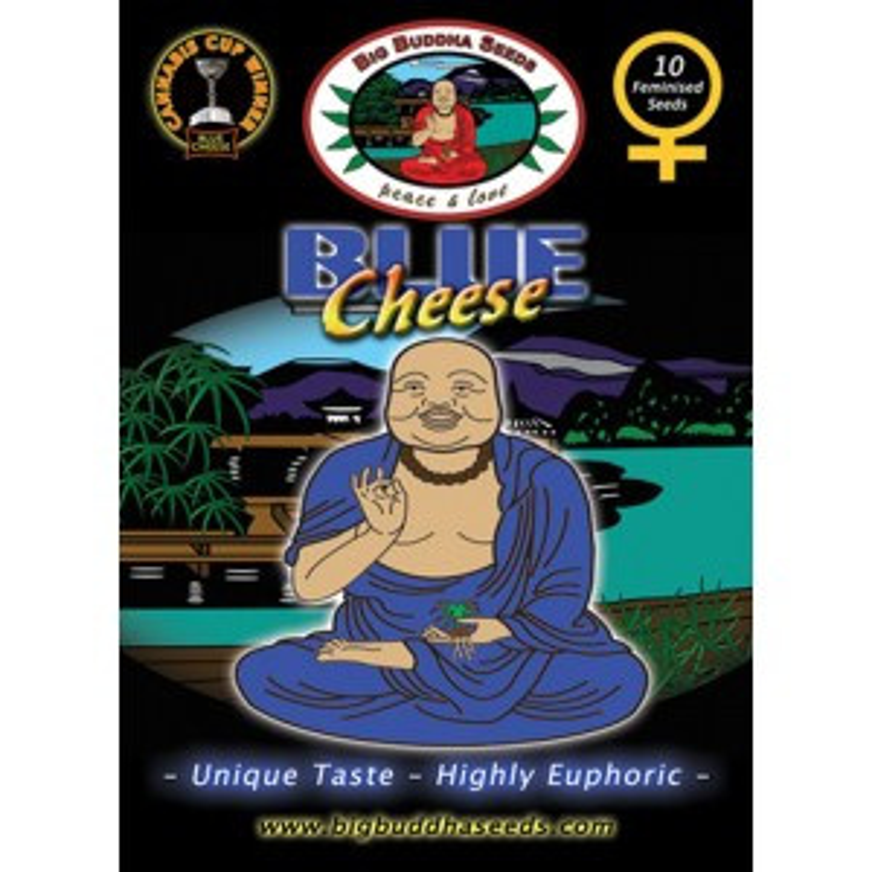 Big Buddha Seeds Blue Cheese (feminisiert)