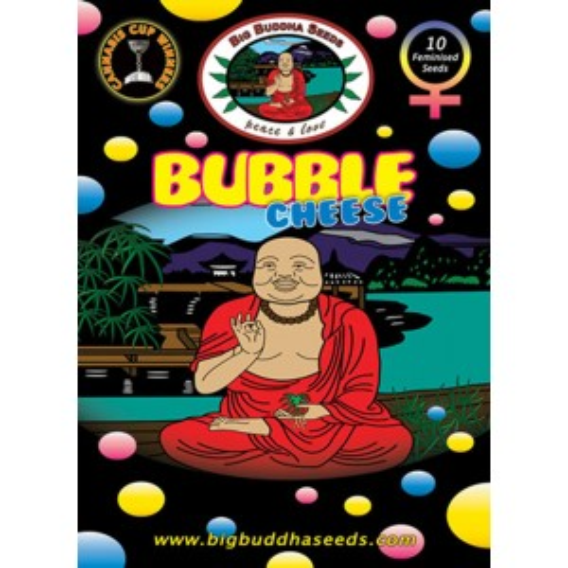 Big Buddha Seeds Bubble Cheese (feminisiert)