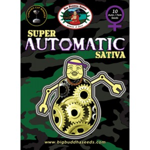 Big Buddha Seeds Super Automatic Sativa (feminisiert)
